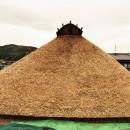 愛知の茅葺き再生[茅葺き]の写真 野屋根