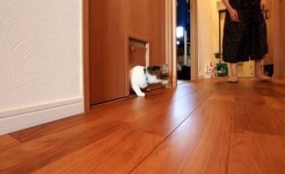 """猫ちゃん入り口 (""""小さな家族""""のためすべてのドアに専用口を設けた「優しい家」~K様邸~)"""