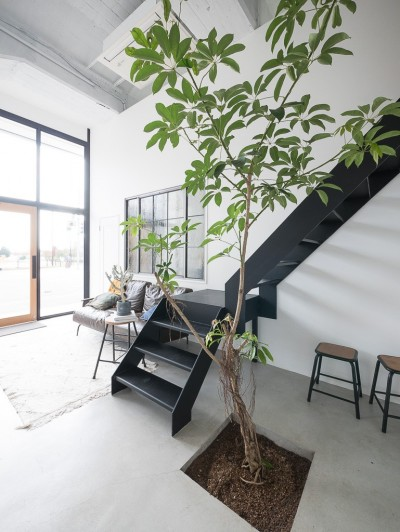 室内にグリーンを (倉庫リノベーション_シンプル海外スタイル)