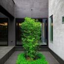 摂津の家の写真 坪庭のクロチク