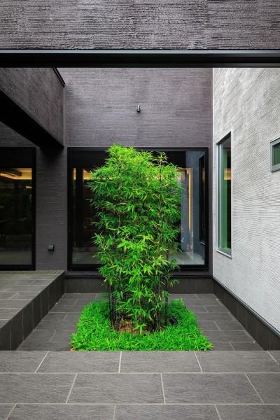 坪庭のクロチク (摂津の家)