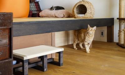 Y邸-長年の家への不満をリノベーションで解決! 猫4匹と快適に暮らす (リビング」)