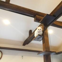 家族も、愛猫も大満足!光と風を楽しむLDKに『まるごと再生』 (【キャットウォーク】)