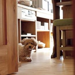 大阪府Aさん邸:温かみのある木のキッチンが主役の、レトロナチュラルな空間 (愛犬と一緒に暮らす空間)