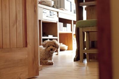 愛犬と一緒に暮らす空間 (大阪府Aさん邸:温かみのある木のキッチンが主役の、レトロナチュラルな空間)