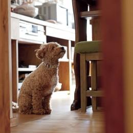 大阪府Aさん邸:温かみのある木のキッチンが主役の、レトロナチュラルな空間 (愛犬と一緒に暮らす空間2)