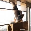 W門仲の写真 猫たちも大満足