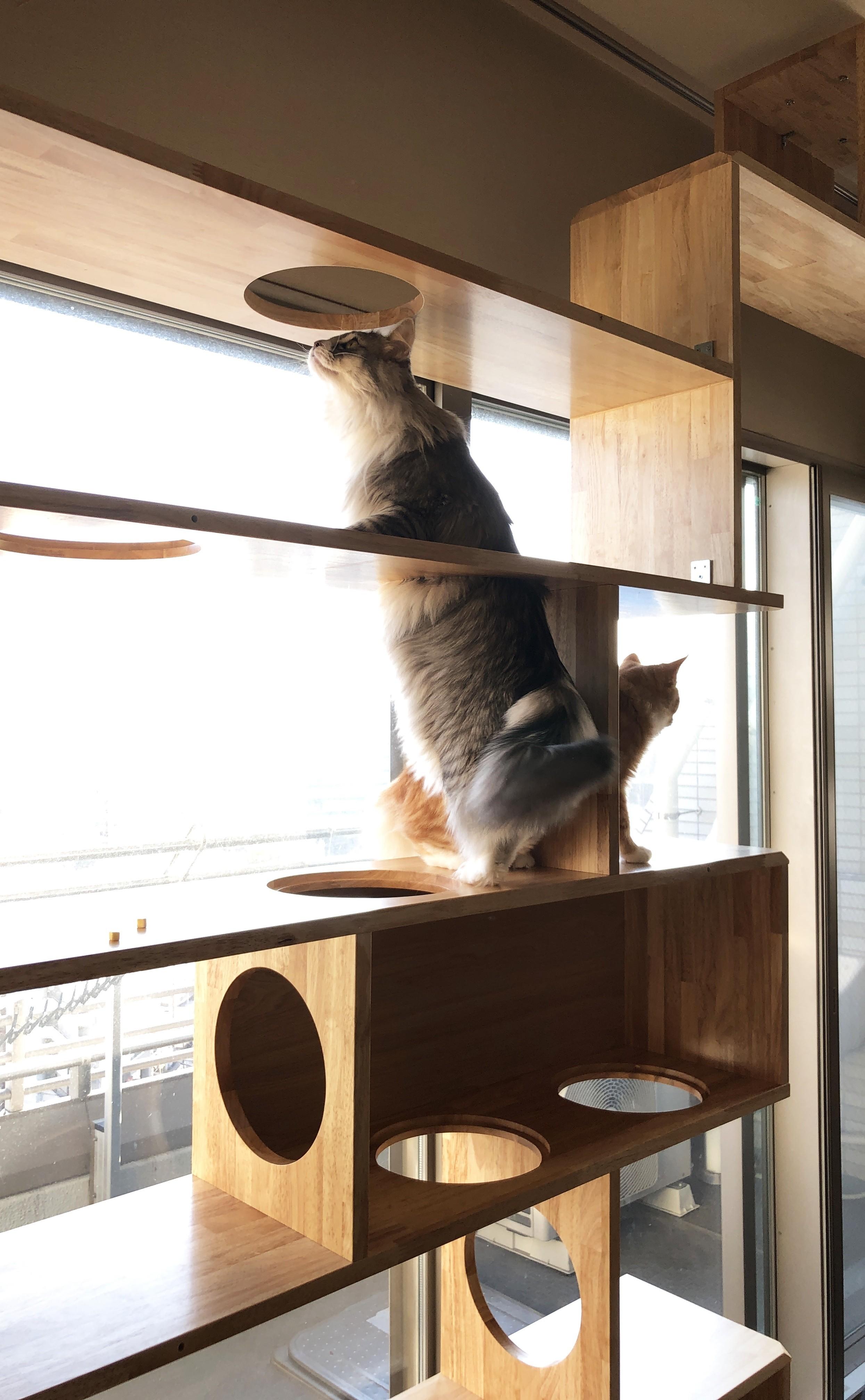 リビングダイニング事例:猫たちも大満足(W門仲)