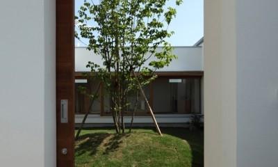 海東の家/地に近い暮らし 中庭が広がる住まい (中庭に続く引き戸)