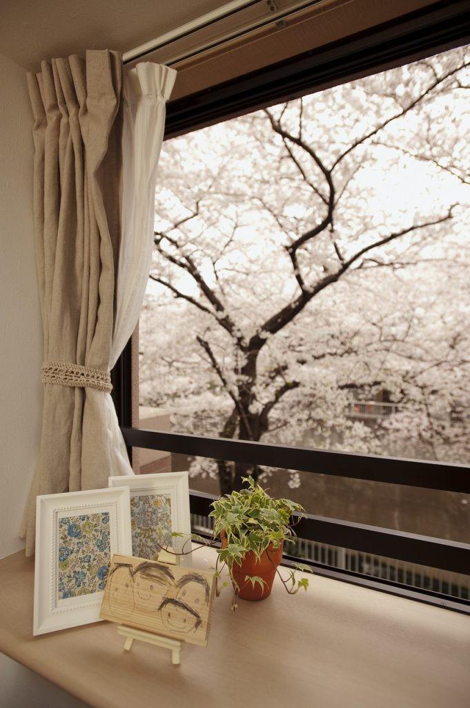 桜とパインと家族と。 (桜)