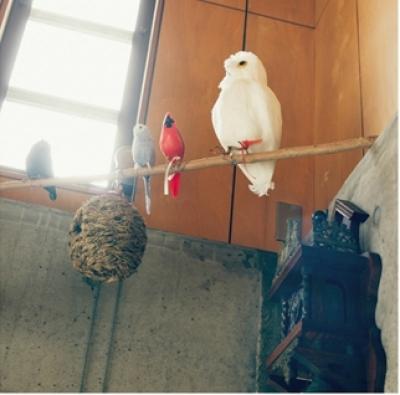 リビング天井の遊び心 (リノベーション / skra)