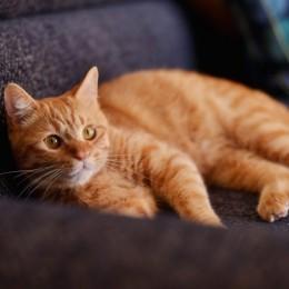 猫とくつろぐ長い廊下の家 (にゃんこも満足)
