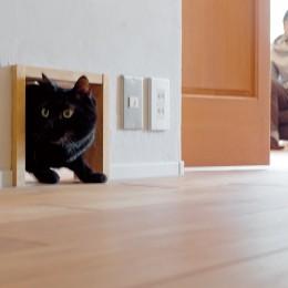 京都府Kさん邸:建具まで自然素材の空間で、子どももネコものびのびと。 (愛猫と暮らす家)