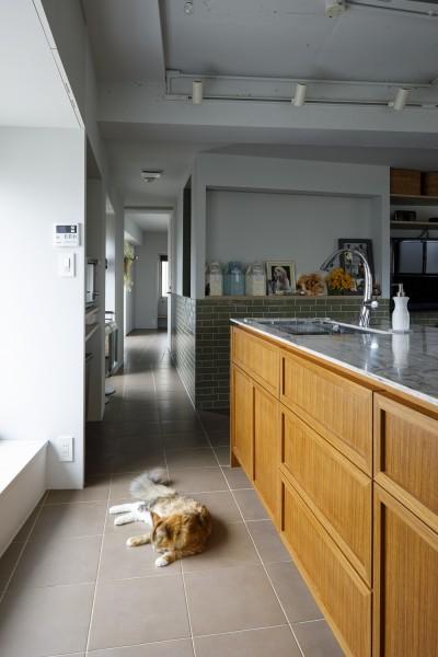 廊下 (S邸-ごく普通のマンションが猫も喜ぶ「光と風がまわる」空間に)