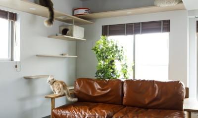 S邸-ごく普通のマンションが猫も喜ぶ「光と風がまわる」空間に (リビング)