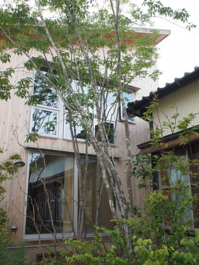 植栽は自然に (遠州おおやねの家〜とおり土間の家〜)