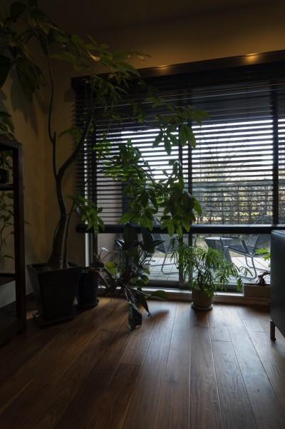 窓周り (太陽と風〜様々な素材のレイヤーを楽しむリノベーション)