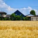 藍いろの家~横葺きのガルバリウム外壁が特徴の家型のおうち。家型フォルムの中の通り土間は家族のお気に入り~の写真 黄金色の麦畑の中の藍いろの家~四季を通じて風景に馴染む