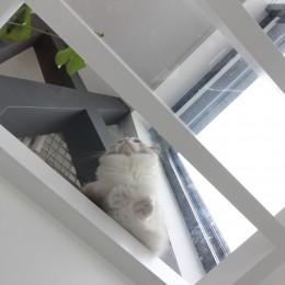 公園前の家 OUCHI-44 (猫2号)