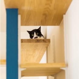 HYGGRE-駅近マンションで猫とルンバとスマートな毎日を (キャットウォーク)