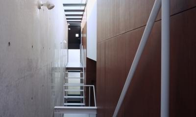 東北沢の住宅 / リビングに木の箱が浮遊する (トップライト、吹き抜け、階段)