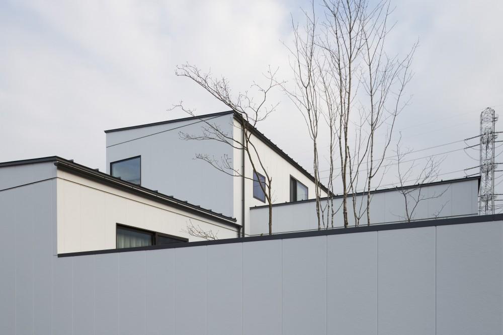 N House (道路側から見る「静の庭」)