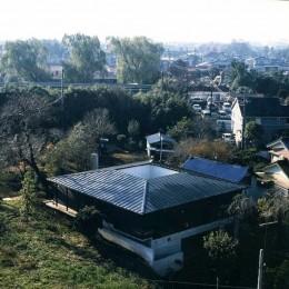 回の家~桜の大木と共に生き中庭を中心に回遊する家 (上空より外観を見る)