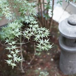 きいちゃんち~狭小地を有効に活用した2世帯住宅 (中庭)