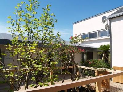 外観 (茅ケ崎東海岸北の家~中庭で緩やかにつながる2世帯住宅)