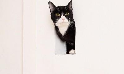 2つのトンネルのあるアトリエ (アトリエ2 ― 愛猫用の小さな窓)