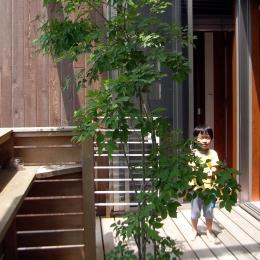 本のギャラリーのある湘南の家 (中庭)