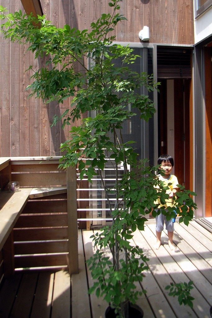 本のギャラリーのある湘南の家の写真 中庭