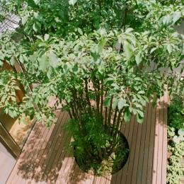 大井町の家―中庭を囲むH型プラン (シンボルツリーのある中庭)