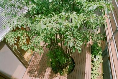 シンボルツリーのある中庭 (大井町の家―中庭を囲むH型プラン)
