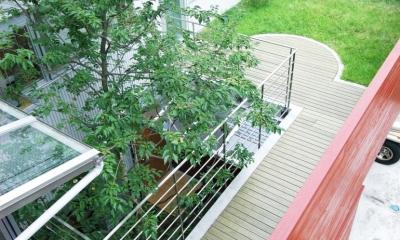 浅草の家―2階にある庭 (2階にある屋上庭園)