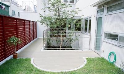 浅草の家―2階にある庭 (屋上庭園とシンボルツリー)