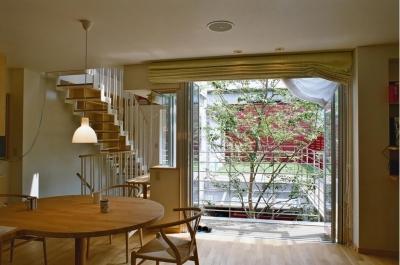 浅草の家―2階にある庭 (シンボルツリーを眺めるリビング)