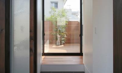 猫と暮らす中庭のある家 (玄関から中庭のシンボルツリーを見通す)