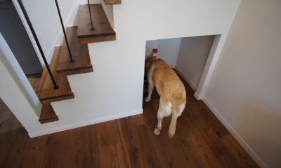 『BASC GRAY』 ― 飾る、見せる (階段下・犬のトイレ)