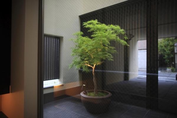 hikariniwaの部屋 玄関から光庭を見る