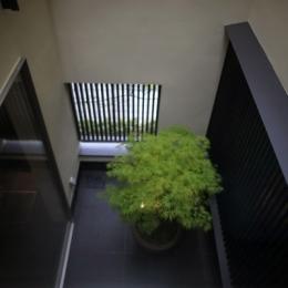 hikariniwa (廊下から光庭を見下ろす)