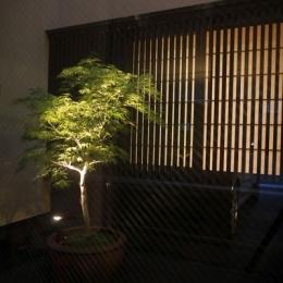 hikariniwa (光庭夜景)