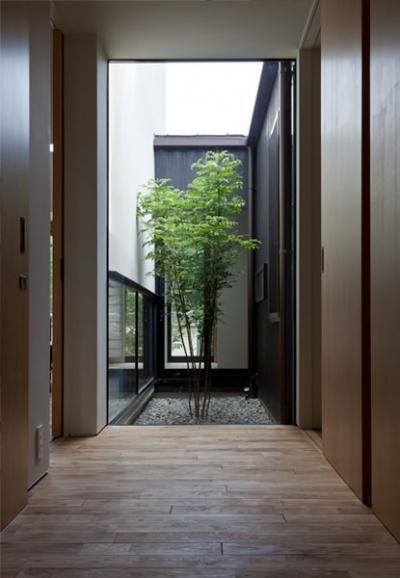 中庭に面した玄関 (小さな中庭と大きな縁側|プライバシーを守りながら開放的に住む住宅【奈良県生駒市】)