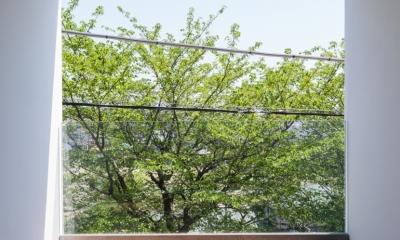 緑と風と光の家 (バルコニー 1)