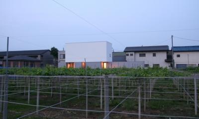 デザイン住宅外観いろいろ (T-a2 ブドウ畑に浮かぶ白い箱型住宅)