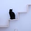 リビングのデザイン・いろいろなあり方の写真 リビングの猫用散歩道