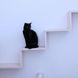 リビングのデザイン・いろいろなあり方 (リビングの猫用散歩道)