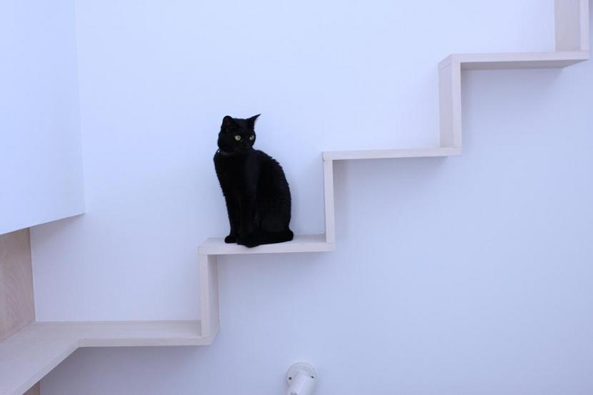 リビングのデザイン・いろいろなあり方の部屋 リビングの猫用散歩道