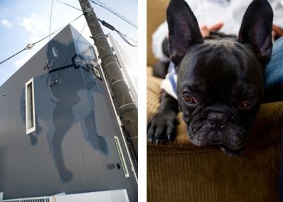 目に飛び込むイラストの外観と愛犬 (SUGOROCK-house)