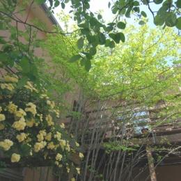 敷地のオープンスペースを有効に使う (小さな家~緑の中で暮らす木のアトリエ付住宅~)